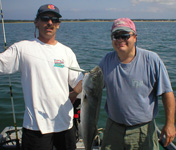A nice bluefish on a MDW sinking bluefish